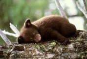Способы уснуть